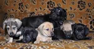 Варя со щенками